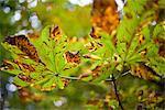 Feuilles des arbres en automne