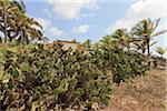 Cactus, Camaratuba, Paraiba, Brazil