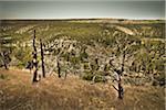 Kaibab National Forest, Arizona, USA