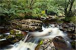Aira Beck, Lake District National Park, Cumbria, England