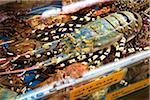Shellfish at Makisha Public Market, Naha, Okinawa, Japan