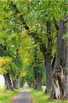 Lime Tree Allee, Marktoberdorf, Ostallgau, Bavaria, Germany