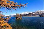 Lärchen auf Island im Silsersee mit Piz Corvatsch, Engadin, Schweiz