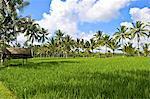 Indonesia, Bali, Ubud, gazebo in a rice field
