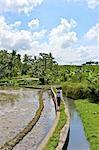 Indonesia, Bali, near Ubud, rice fields