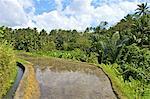 Indonesia, Bali, terrassed rice fields