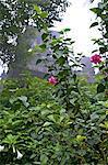 Indonesia, Bali, Bedugul, rose garden