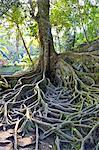Indonesia, Bali, Goa Gajah temple (elephant cave), tree