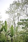 Forêt tropicale de Bali, en Indonésie, près de Bedugul