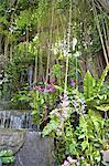 Jardin de Bangkok, Wat Saket, Thaïlande