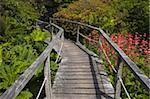 Ein Gang durch Pflanzen und Blumen auf dem Display an Furzey Gärten, Minstead, New Forest, Hampshire, England, Vereinigtes Königreich, Europa