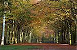 Autumnal colour at Felbrigg woods, Felbrigg, Norfolk, England, United Kingdom, Europe