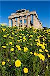 Temple grec Selinus en printemps, Selinunte, Sicile, Italie, Europe