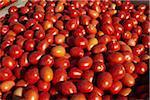 Roma Tomaten, Cawston, Similkameen Land, British Columbia, Kanada