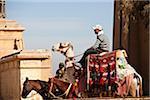 Man on Camel at Giza, Cairo, Egypt