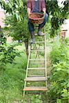 Un homme tenant un panier de cerises cueillies