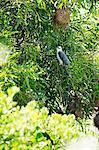 Eule auf einem Baum hocken