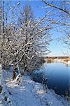 oak on coast river