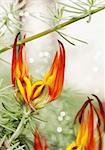 Beautiful exotic bright orange flower, the strelitzia