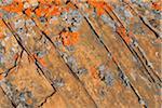 Rock Formation Covered in Lichen, Blomsterbugten, Kejser Franz Joseph Fjord, Greenland