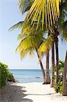 Palm trees and beach, looking towards Caribbean Sea, Grand Cayman, Cayman Islands