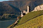 Ehrenfels Castle near Rudesheim, Rhine Valley, Hesse, Germany, Europe