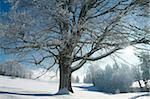 Winterlandschaft bei Thurner, Schwarzwald, Baden-Württemberg, Deutschland, Europa