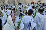 Sukkot feiern mit Lulaw, Klagemauer, Altstadt, Jerusalem, Israel, Naher Osten