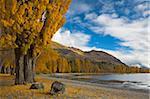 Couleurs d'automne dorer au bord du lac à Wanaka, île du Sud, Nouvelle-Zélande, Otago, Pacifique