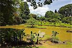 The lake by South Drive in the 60 hectare Royal Botanic Gardens at Peradeniya, near Kandy, Sri Lanka, Asia