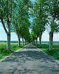 Trees lining rural road