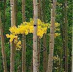 Bäume im Wald zusammen wachsen