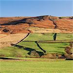Pastures on rural hillside