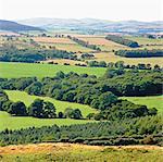 Collines ondulées dans le paysage rural
