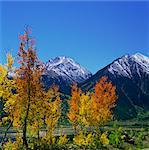 Herbst-Bäume in ländlichen Umgebung