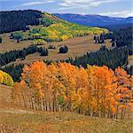 Bäume wachsen an Berghängen in ländlichen Umgebung