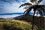View from Kochiyama Observatory, Amami Oshima, Amami Islands, Kagoshima Prefecture, Japan