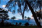 Palm Trees at Dawn, Tokunoshima Island, Kagoshima Prefecture, Japan