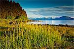 Scenic evening view of coastal grasses and Bartlett Cove, Glacier Bay National Park & Preserve, Southeast Alaska, Summer