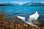An iceberg from McBride Glacier on the shore in Muir Inlet, Glacier Bay National Park & Preserve, Southeast Alaska, Summer