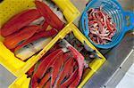 Caisses avec pièces de saumons rouges utilisés pour le traitement de diverses à la pêche de famille Naknek, baie de Bristol, sud-ouest de l'Alaska, l'été