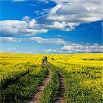 Chemin d'accès dans le champ de canola sous un ciel bleu nuageux, Swartland à Afrique du Sud