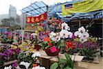 Chinese New Year flower market, Causeway Bay, Hong Kong