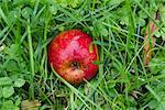 Reifer Apfel auf Gras