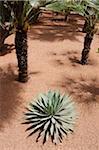 The Majorelle Garden is a botanical garden in Marrakech, Morocco.