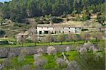 Almond Blossom nearby Es Capdella, Majorca, Balearics, Spain
