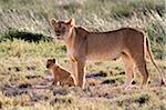 Lioness with six-week-old cub in the Ndutu region of Serengeti National Park, Tanzania.