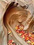 U.S.A., Utah, Zion National Park, Heart Shaped Rock