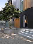 Arbre et étapes à entrée d'étang et Park House, Dulwich, Londres, Royaume-Uni. Architectes : Stephen Marshall