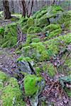 Moss on Rocks, Reginald Hill, Salt Spring Island, British Columbia, Canada